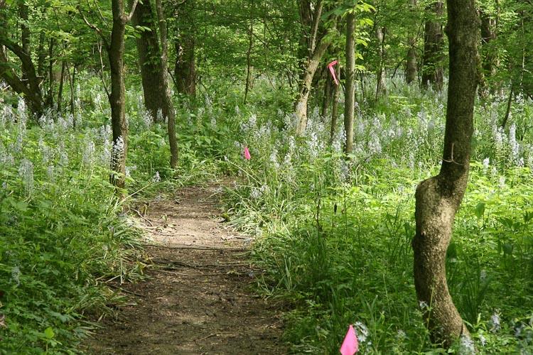 Camassia scilloides habitat