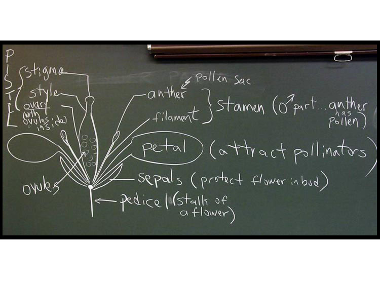 blackboard flower