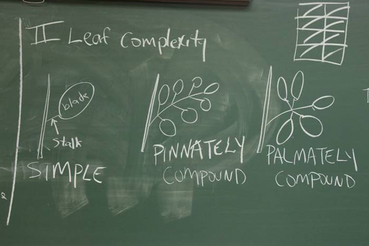 leaf complexity