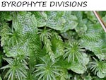 BRYOPHYTE DIVISIONS