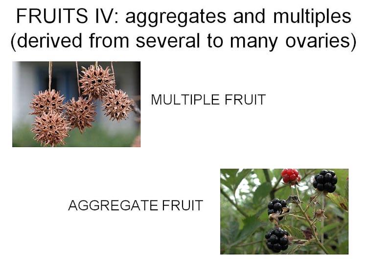 aggregates multiples