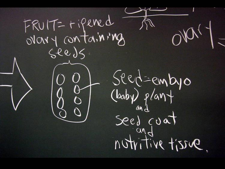 blackboard fruit