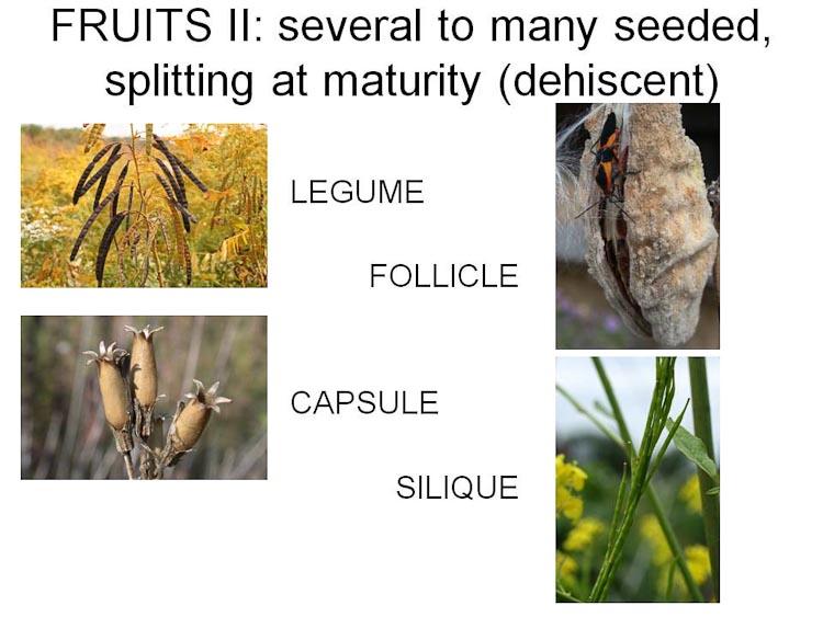capsules etc