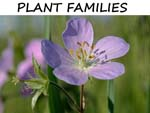 PLANT FAMILIES INTRO