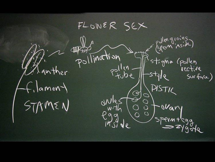 pollination and fertliization