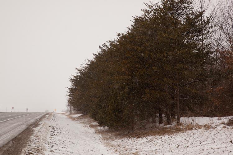 Pinus virginiana roadside